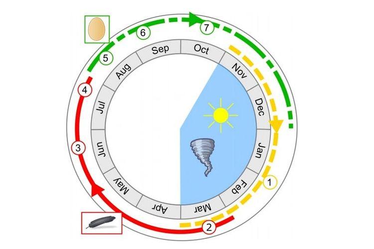 Siklus tahunan burung dodo