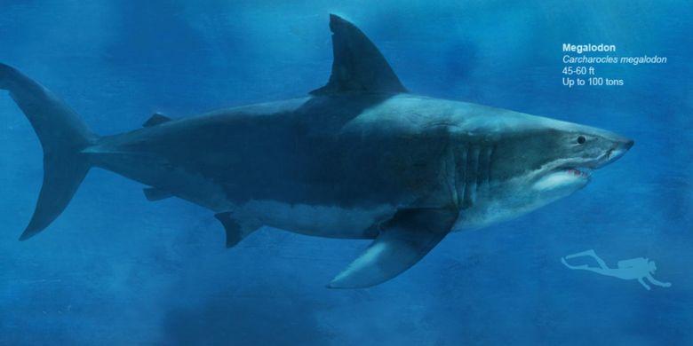 Ilmuwan berusaha mengungkap bagaimana hiu purba raksasa Megalodon bisa punah