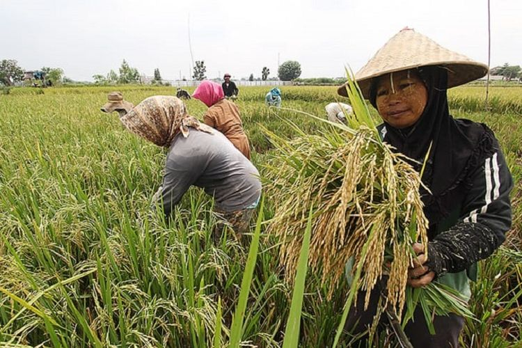 Neraca Perdagangan Pertanian Indonesia 2018 Surplus Rp 139,6 Triliun