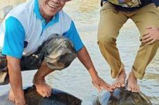Viral Foto Berdiri di Atas Kura-kura, Dua Kepala Dinas Minta Maaf