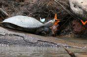 Video Ini Rekam Kupu-kupu Minum Air Mata Kura-kura