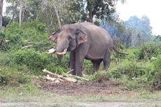 Gajah Rahman dan Indro Pun