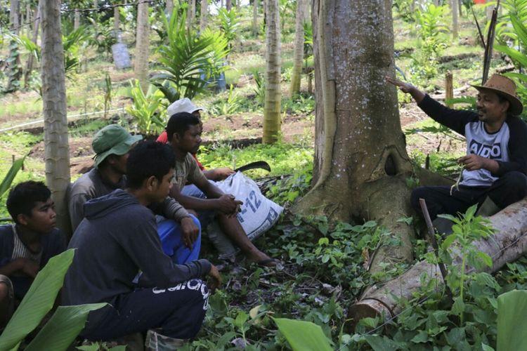 Muslahuddin Daud sedang menjelaskan teknik perawatan tanaman kepada mantan petani ganja yang bekerja di kebunnya, di Desa Lamteuba, Kecamatan Seulimum, Kabupaten Aceh Besar.