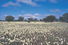 3 Festival Bunga Liar di Australia Barat Tahun Ini