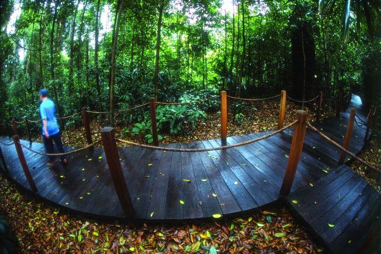Rain forest di Singapore Botanic Gardens, Bukit Timah, Singapura.