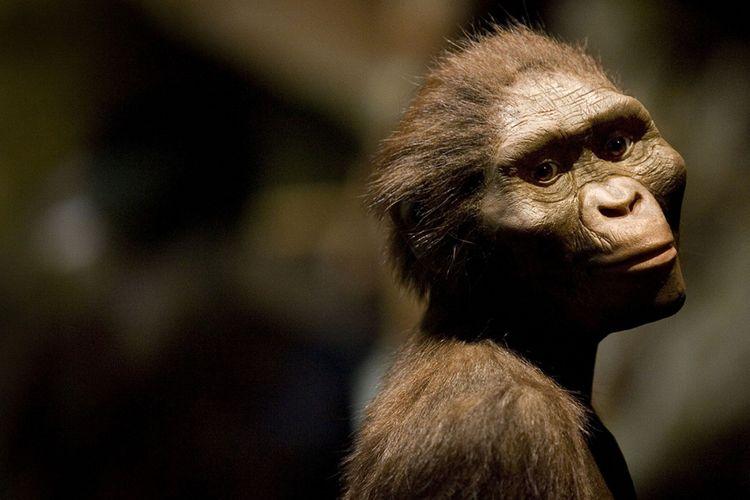 A.afarensis muda memiliki kaki mirip simpanse, yang digunakan untuk membantu memanjat pohon atau berpegangan pada ibu mereka