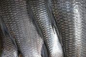 Sisik Ikan Bisa Jadi Obat Luka 'Halal' untuk Semua Pemeluk Agama