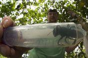 Cerita 4 Ahli Biologi Temukan Lebah Raksasa Wallace Saat Liburan
