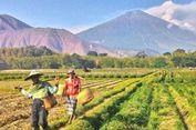 Jalur Pendakian Gunung Rinjani dari Lombok Tengah Resmi Dibuka