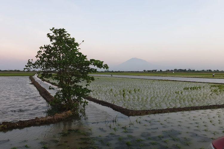 Sodetan Sungai Jadi Alternatif Petani di Indramayu Hadapi Musim Kemarau