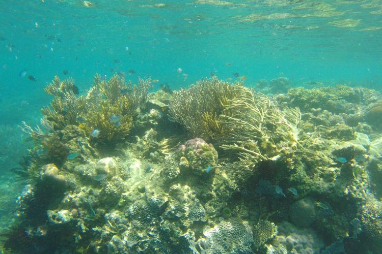 Snorkeling di Manjarite TN Komodo, Spot yang Sepi Wisatawan