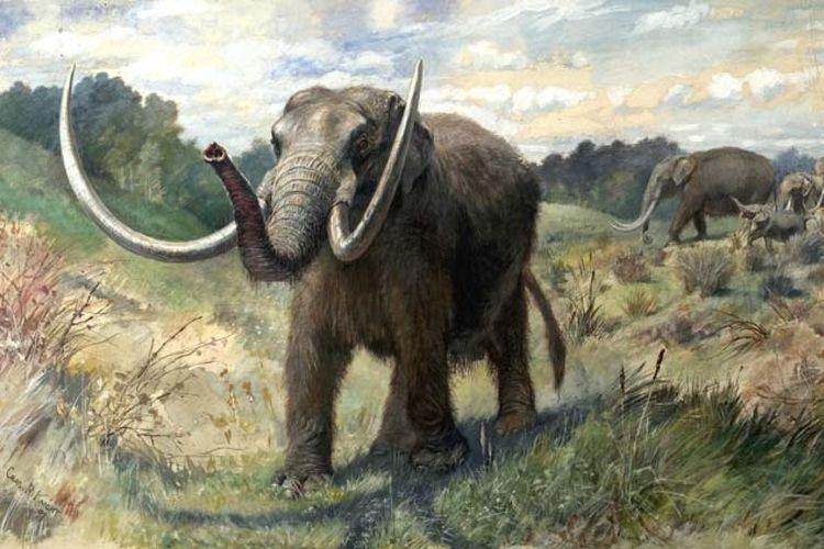 ilustrasi mastodon