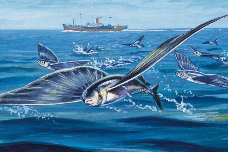 Ikan terbang/ sciencefocus