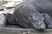 Kapan Waktu Terbaik Berkunjung ke Taman Nasional Komodo?