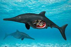 Langka, Naga Laut Purba Ditemukan dengan 6 Bayi di Perutnya