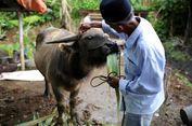 Motong Kebo Andilan, Tradisi Masyarakat Betawi Saat Bulan Ramadhan