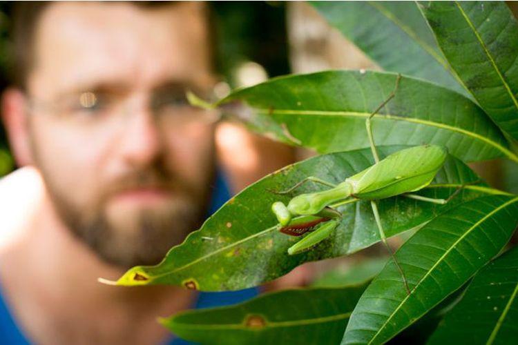 Belalang termasuk serangga paling efisien di antara serangga lainnya.