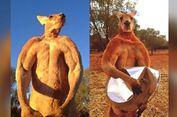 Roger Si Kanguru Berotot Mati di Usia 12 Tahun