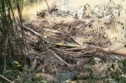Mayat Perempuan Tanpa Identitas Membusuk di Sungai Hebohkan Warga