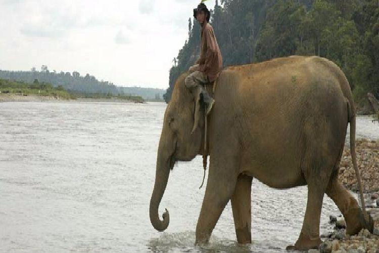 Gajah di Sebelat, Bengkulu Utara