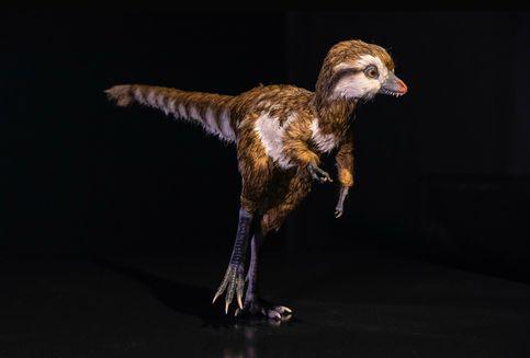 Kecil dan Berbulu, Inilah Rupa Menggemaskan Bayi T-Rex