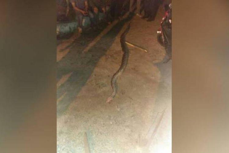 Ular menyerang dan membunuh seorang pria yang menangkapnya. (Pemadam Kebakaran dan Penyelamatan Selangor via Channel News Asia)