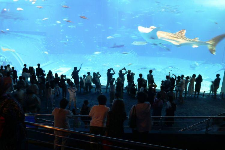 Wisatawan memenuhi giant tank di Okinawa Churaumi Aquarium, salah merupakaAquarium terbesar di Jepang yang berisikan ikan dari Samudera Pasifik dan Laut China Selatan, Sabtu (29/6/2018).