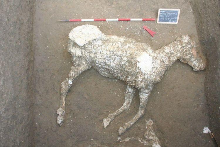 Sisa-sisa kuda Romawi kuno telah ditemukan terkubur di kota Pompeii