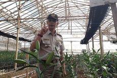 Mengandung Virus Berbahaya, 272.300 Bibit Bunga Lili Dimusnahkan di Bandung