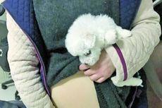 Pura-pura Hamil, Perempuan di China Coba Selundupkan Anak Anjing