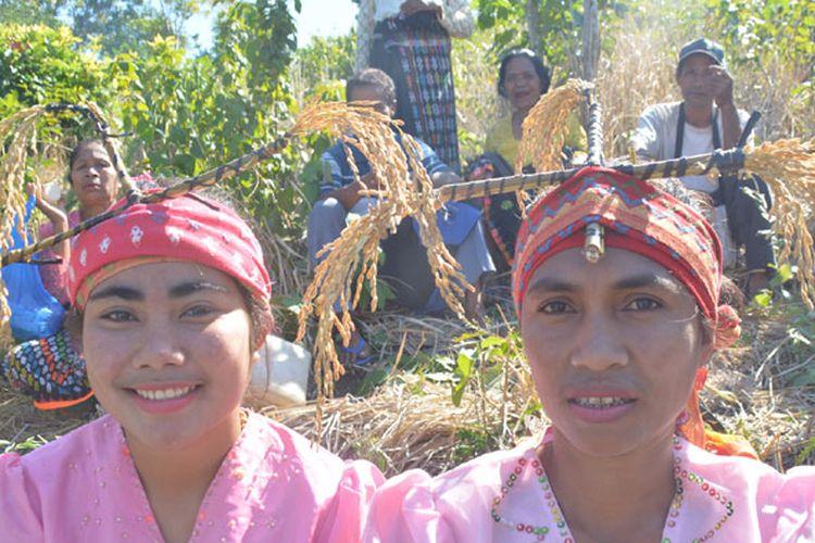 Karong Woja Wole, Tradisi Mengantar Padi Suku Gunung di Flores (1)