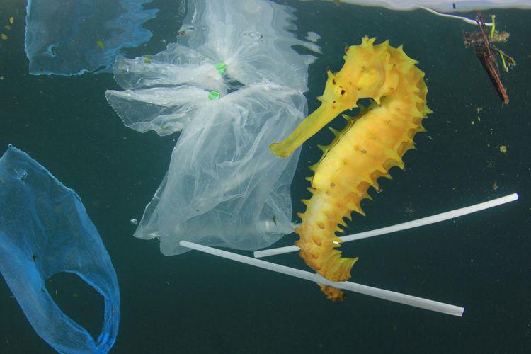 Seekor kuda laut tengah berenang di antara sampah-sampah plastik yang melayang di air.