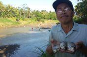 Mengering, Ratusan Warga Kulon Progo Tangkap Ikan di Sungai
