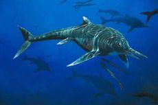 22 Tahun Jadi Koleksi Pribadi, Fosil Predator Laut Purba Diungkap Ahli