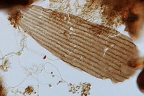 Lewat Fosil Berusia 200 Juta Tahun, Peneliti Ungkap Evolusi Kupu-kupu