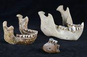 Punya Gigi Unik, Spesies Kera Purba Baru Ditemukan di Indonesia