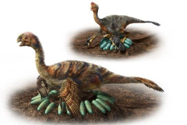 Oviraptorosaurus