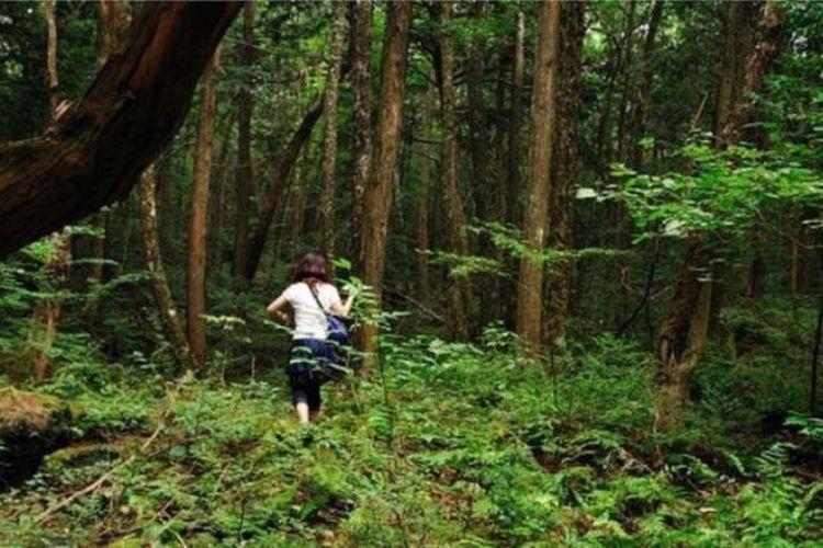 Dengan pepohonan lebat dan hampir tidak ada binatang liar, Aokigahara merupakan tempat sunyi dan mencekam. (BBC/Julian Colton)