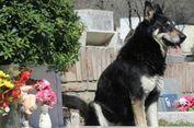 Berita Terpopuler: Anjing Tinggal di Makam Majikan, hingga Kertas Contekan Trump