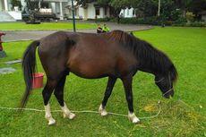 KPK Titipkan Dua Kuda Sandalwood Jokowi ke Istana Bogor