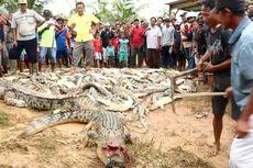 Ratusan Ekor Buaya Dibantai Warga di Sorong