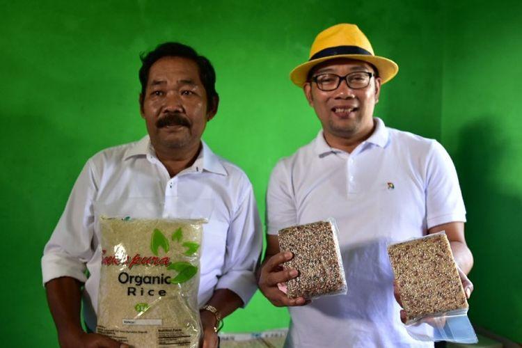 Temui Petani Tasikmalaya Ridwan Kamil Bahas Peluang Beras Organik