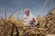 Israel Diduga Semprotkan Bahan Kimia ke Lahan Pertanian di Jalur Gaza