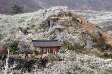 Lupakan Seoul, Saatnya Jalan-jalan ke Jeolla Selatan
