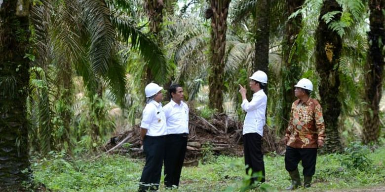 Presiden Joko Widodo bersama Menteri Pertanian (Mentan) Andi Amran Sulaiman saat mengunjungi salah satu perkebunan kelapa sawit.
