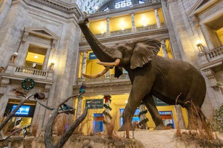 National Museum of Natural History, Washington DC, Amerika Serikat