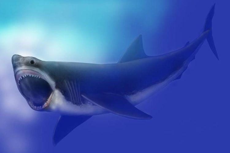 Ilustrasi Megalodon