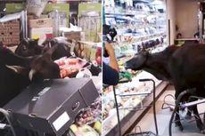 Kawanan Sapi Liar Menerobos Masuk Supermarket di Hong Kong