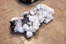 Membeku Setelah Terkubur di Salju, Kucing Ini Berhasil Selamat