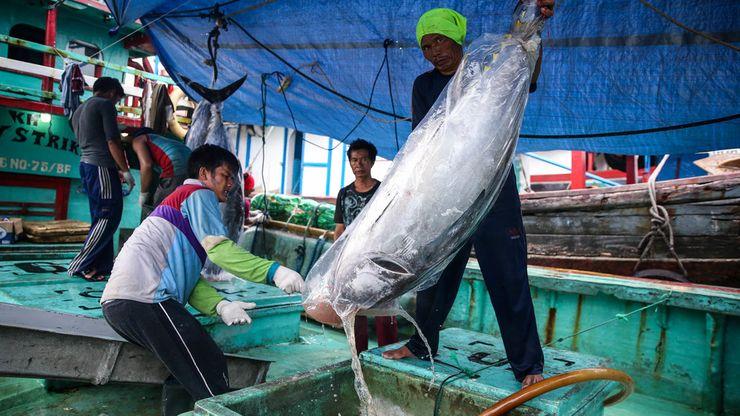 Gairah Industri Ikan Tuna di Indonesia